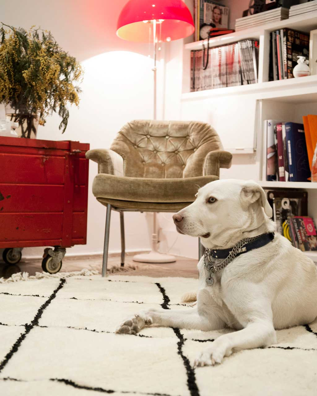beni ouarain rug dog chair design