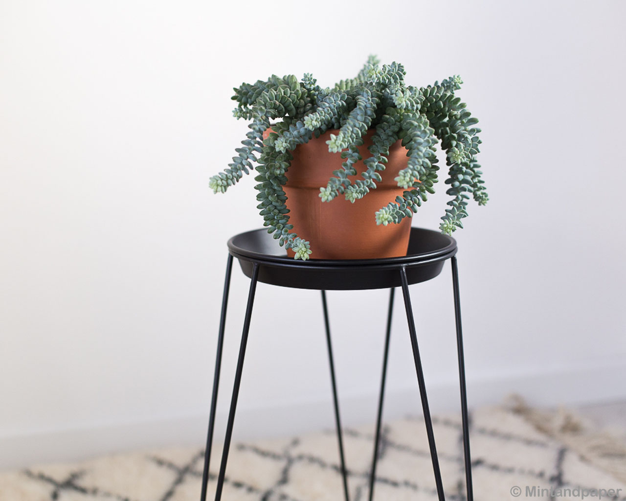 brown pot with green plant contemporary rugs