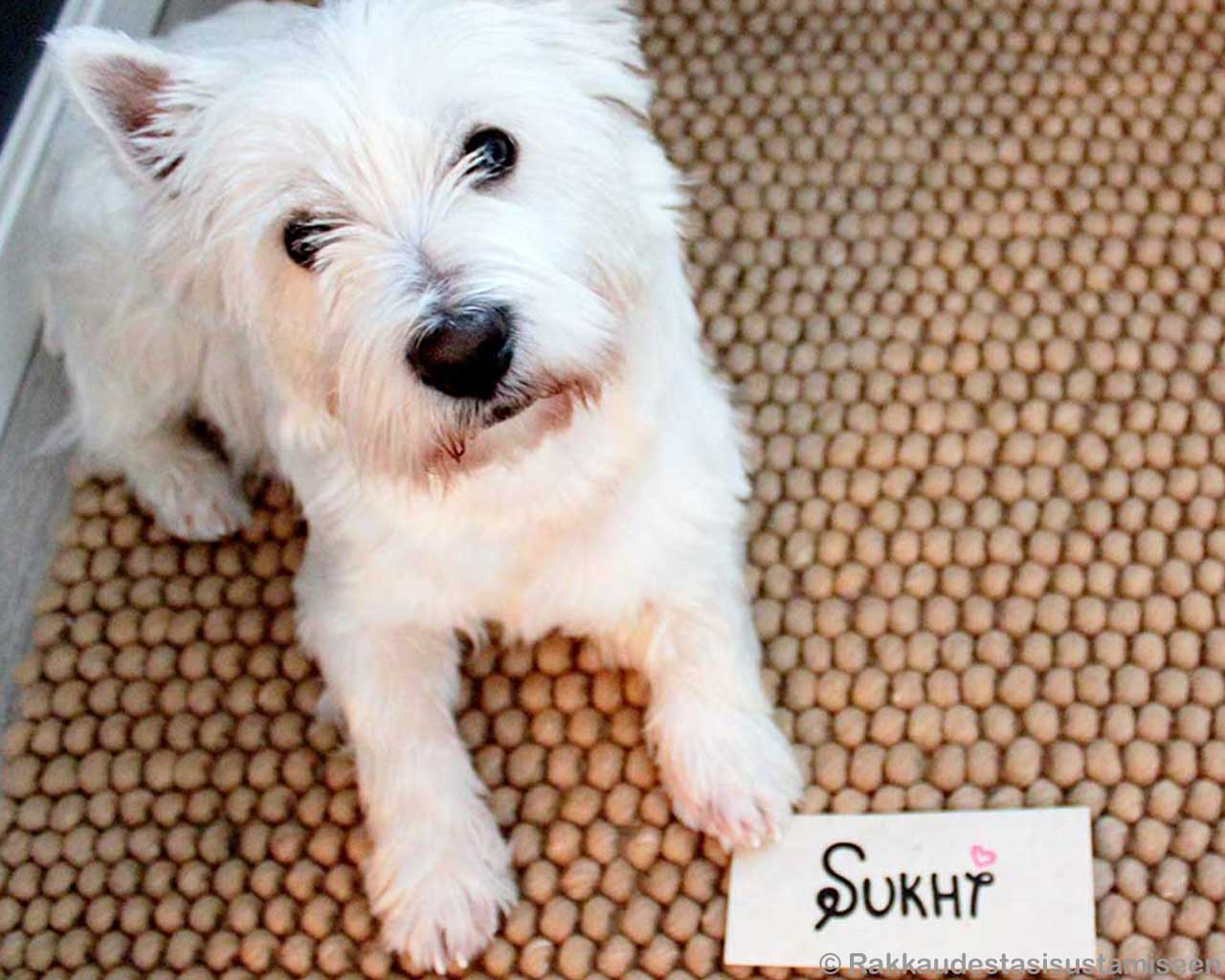 white cute dog sukhi brown woollen loop carpet